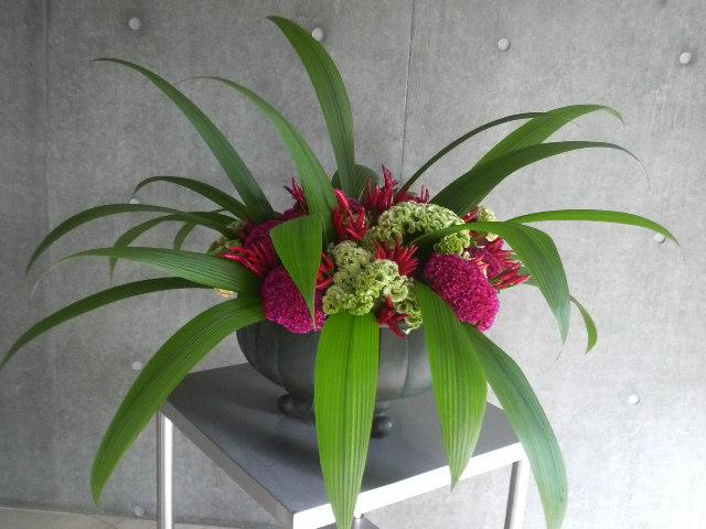 花あしらい2011/09